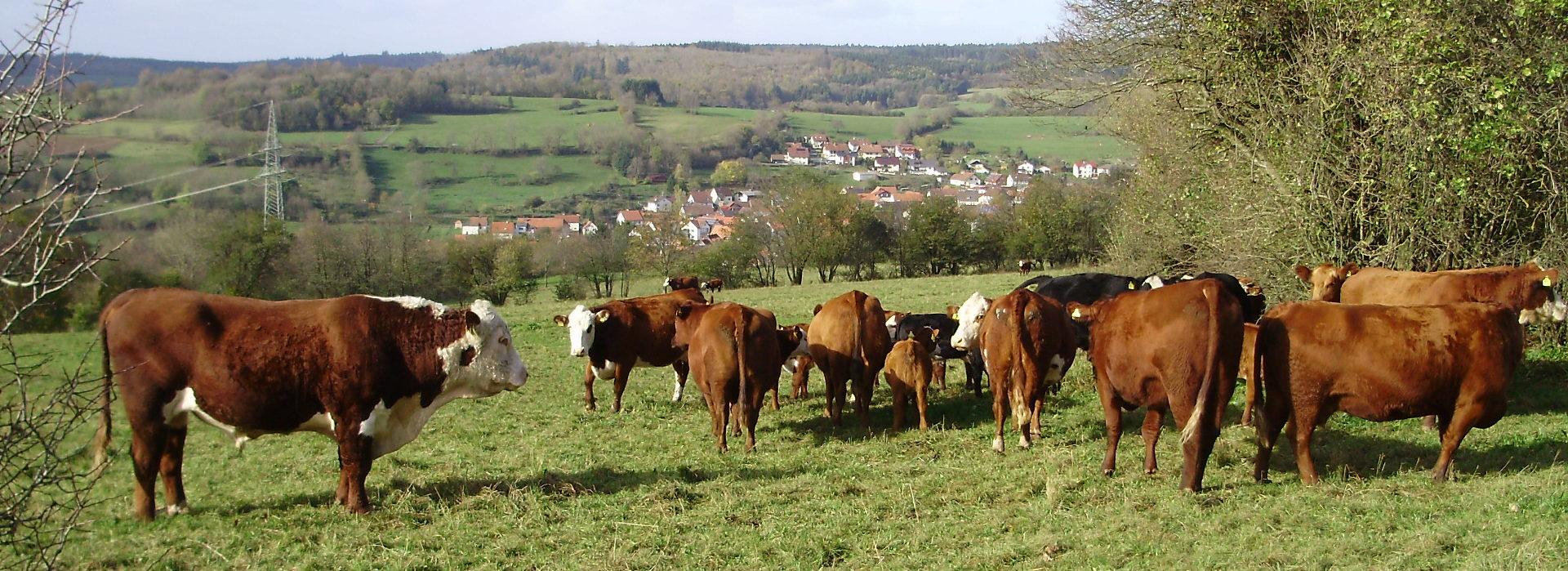 biorindfleisch-schotten.de